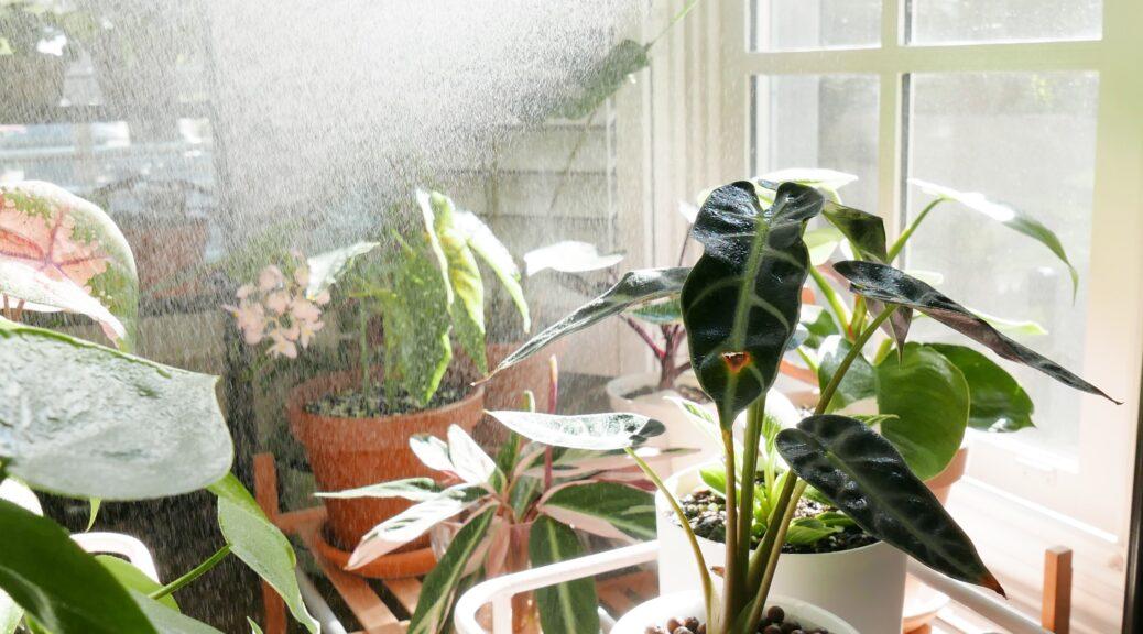 nappali virágokkal és műanyag ablak